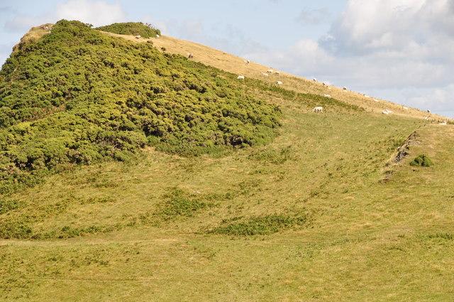 North Devon : Grassy Hillside