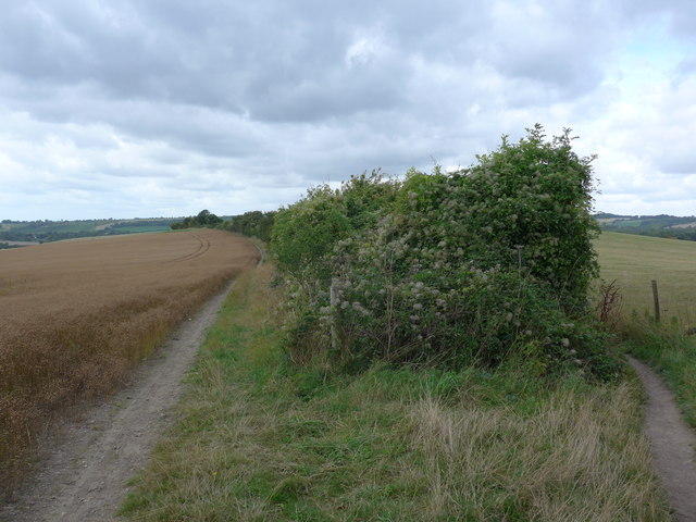 South Downs Way, Exton to Buriton (36)