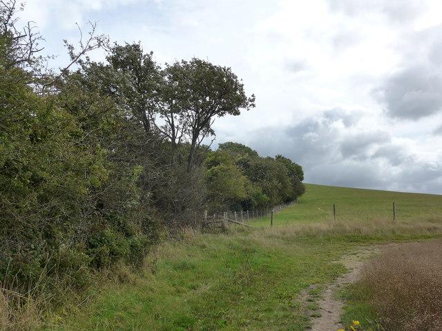 South Downs Way, Exton to Buriton (37)