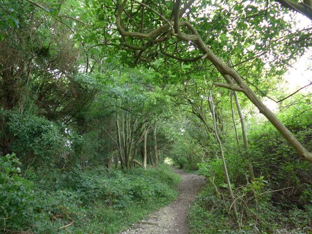 South Downs Way, Exton to Buriton (40)