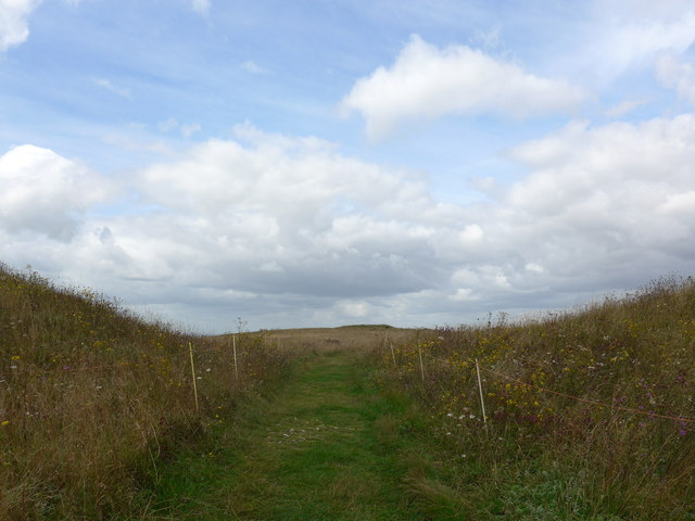 South Downs Way, Exton to Buriton (48)