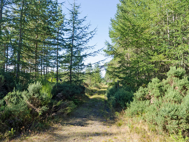 Enticing track into the Millbuie Forest