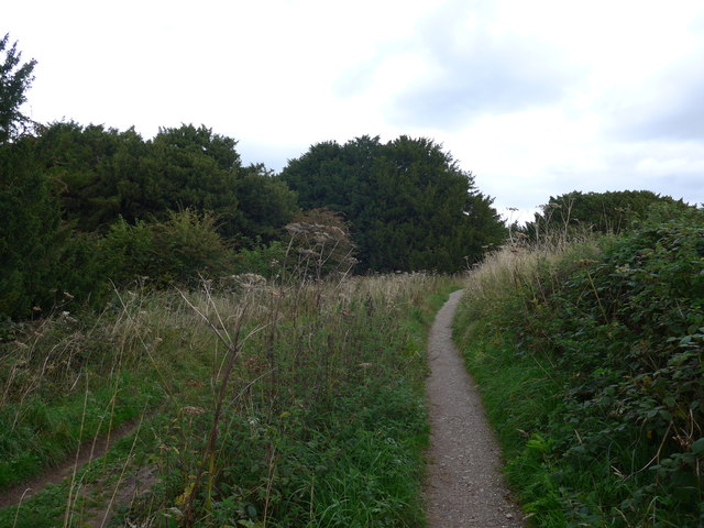 South Downs Way, Exton to Buriton (53)