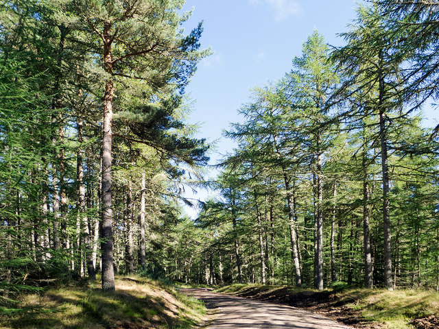 Forest road in the Millbuie Forest