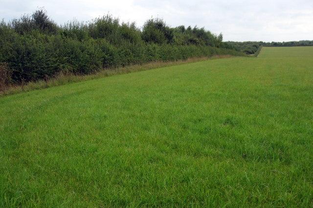 Plantation by Breach Farm