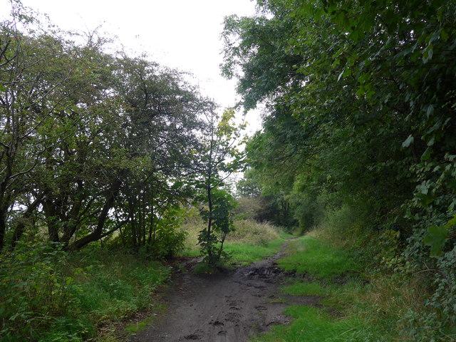 South Downs Way, Exton to Buriton (60)
