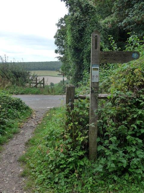 South Downs Way, Exton to Buriton (64)