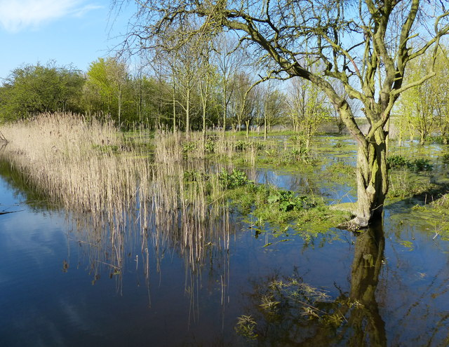 Fenland at the Willow Tree Fen Nature Reserve
