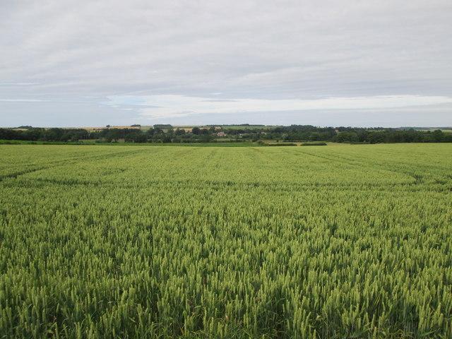 Over  fields  toward  Langton