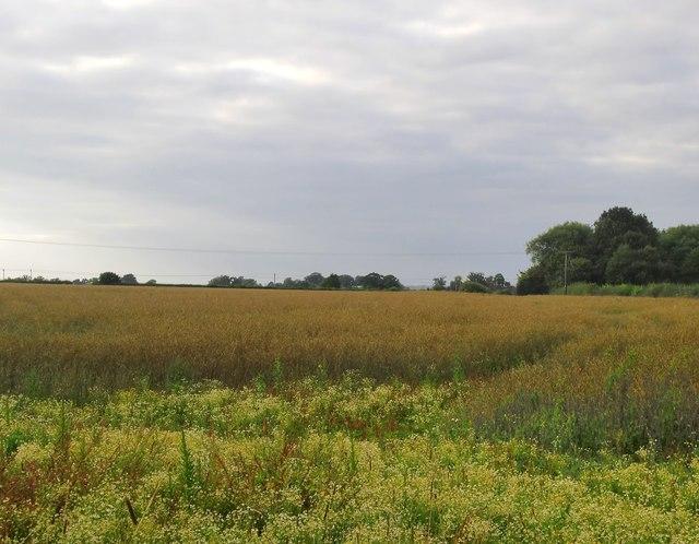 Farmland at Ilmer