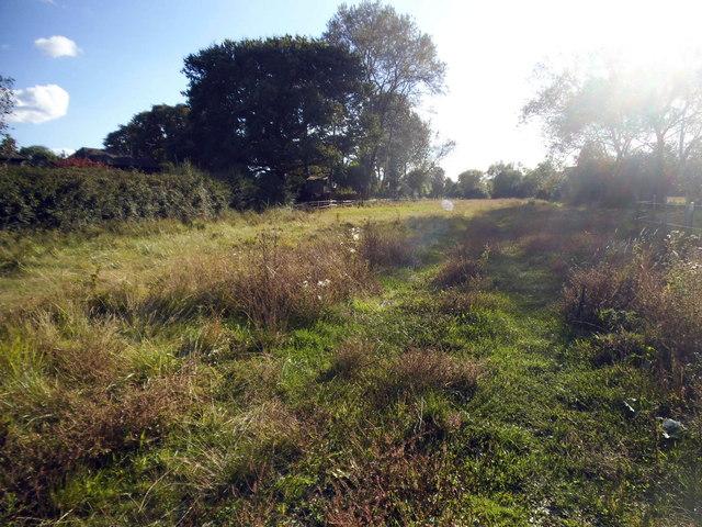Field by Ashtead Woods Road