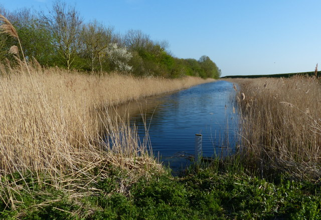 Pool in the Willow Tree Fen Nature Reserve
