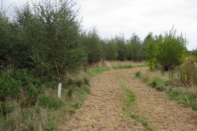 Path round Blackberry wood