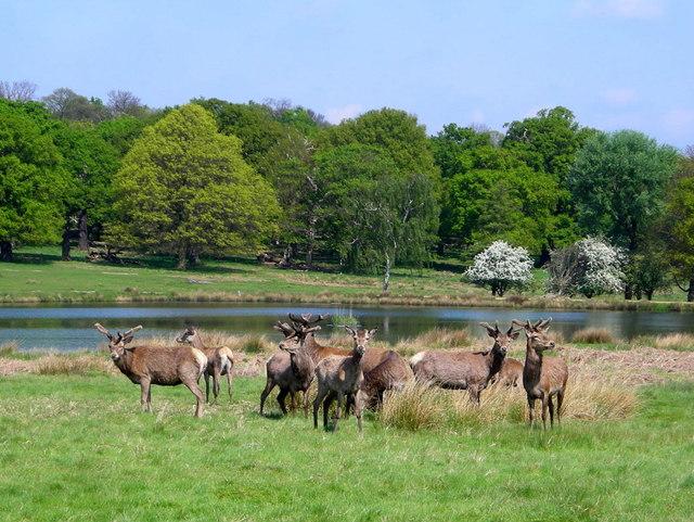 Deer at the Pen Ponds