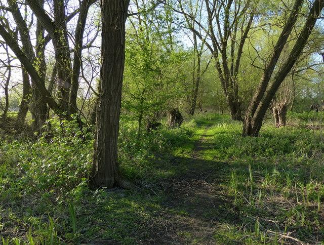 Woodland at Baston Fen Nature Reserve
