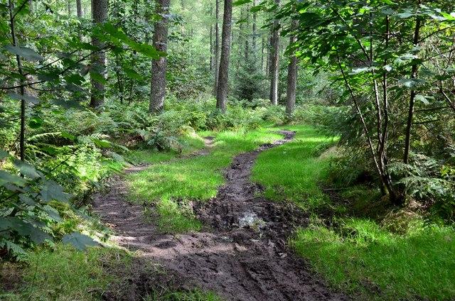 Path in Cademuir Forest
