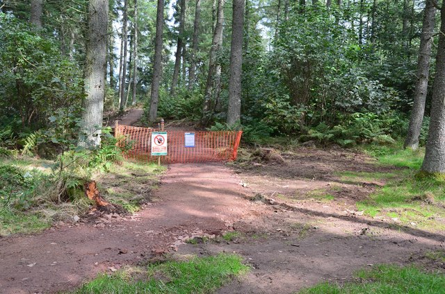 South end of new path in Cademuir Forest