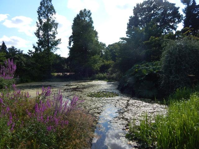 Water Lily pond, Kew Gardens