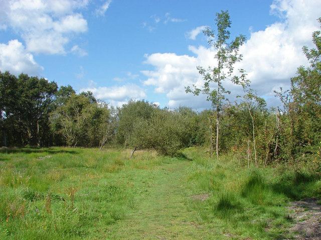 Bookham Common western plain