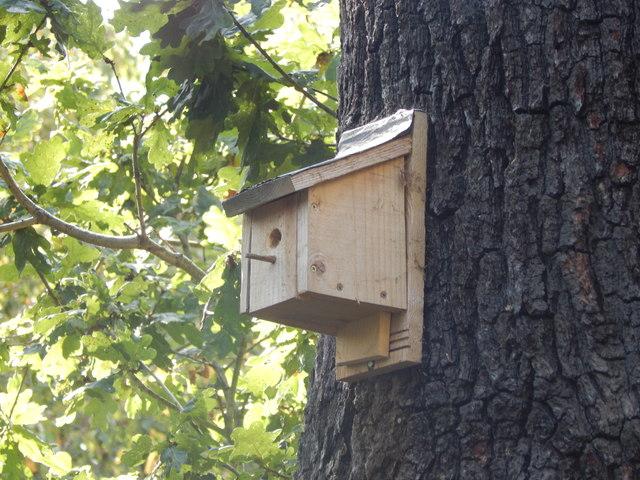 Bird box on Oak Tree