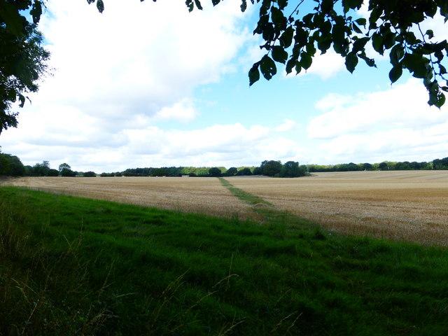 Long straight footpath crosses field of stubble