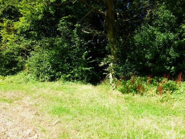 Footpath reaches Closedown Wood