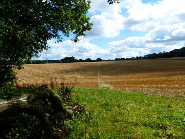 Looking along footpath from Closedown Wood