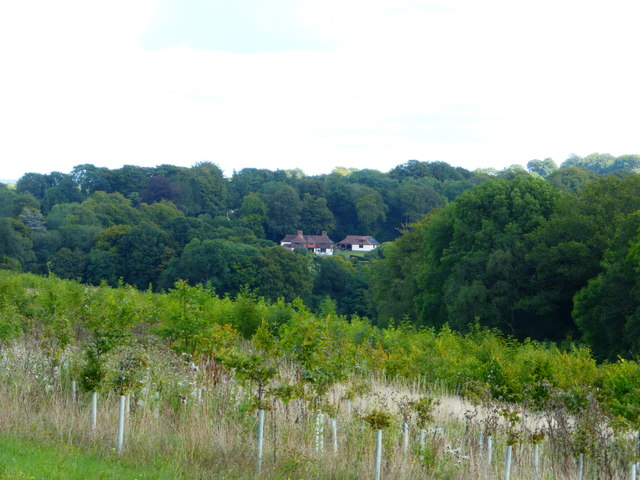 View east across valley to Powntley Copse