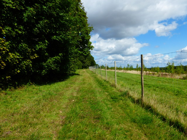 Footpath going northwards on the eastern edge of Closedown Wood