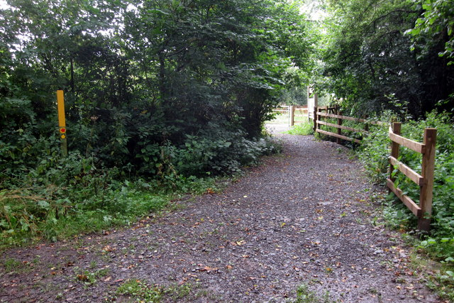 Choice of paths by Normanton Wood