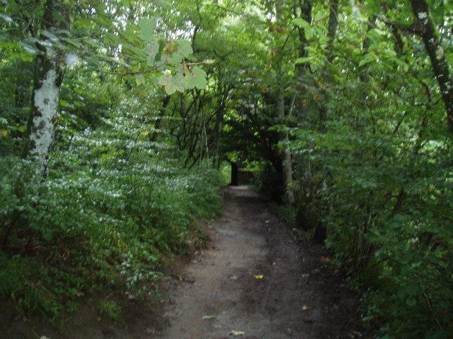 Woodland path near The Hermitage