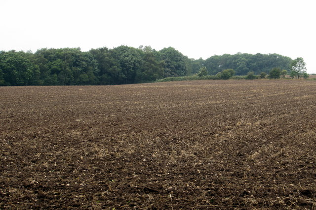 Pingle Plantation from the byway