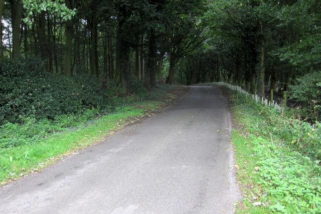 Lane through the trees