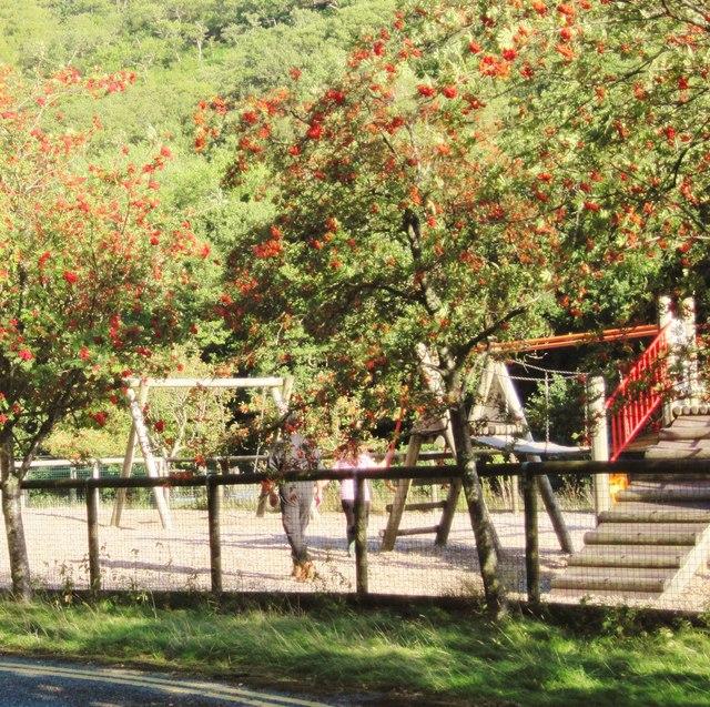 Playground with rowan trees