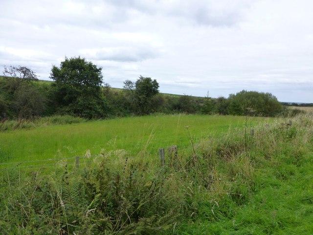 Marsh or former quarry