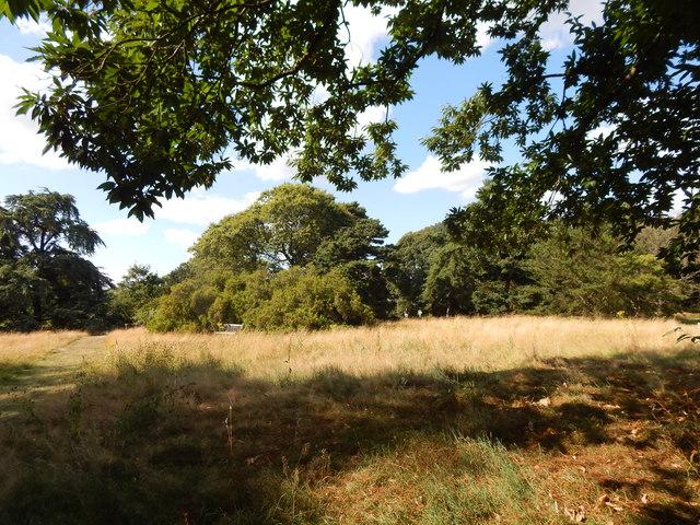 Open area in Kew Gardens