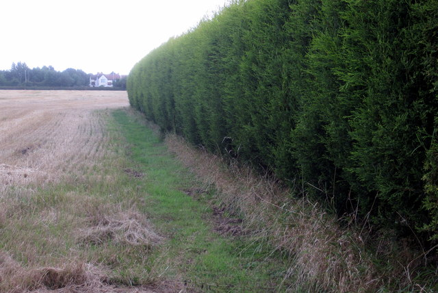 Hedge round the house in a field