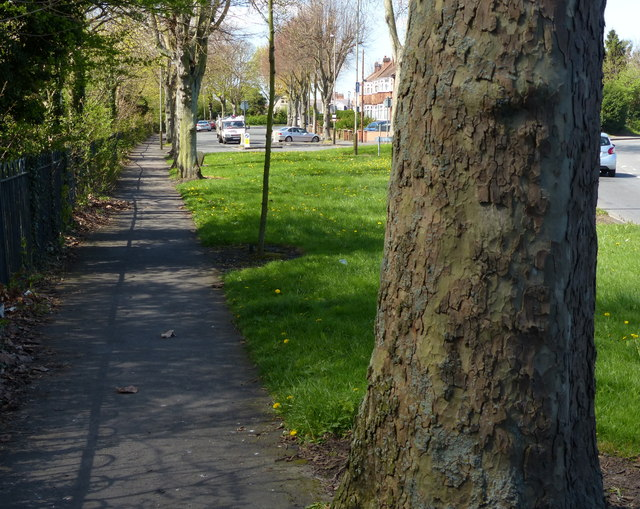 Footpath and tree along Groby Road