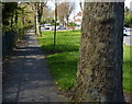SK5705 : Footpath and tree along Groby Road by Mat Fascione