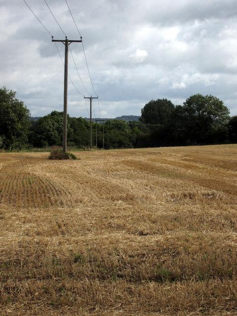 Power poles in stubble field