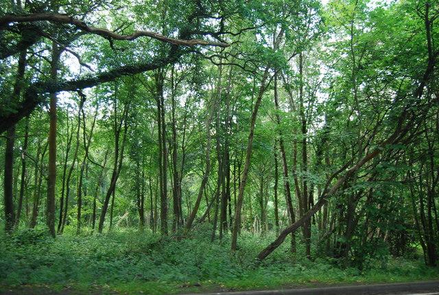 Stickhill Wood