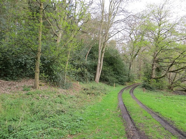 Track, Dudmaston woods