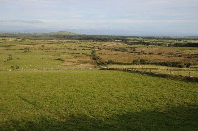 Rough grassing near Llanaelhaearn
