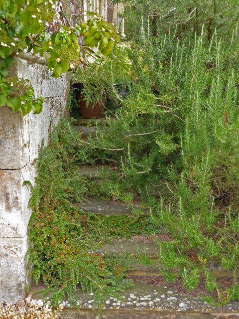 Charlecote Park - overgrown steps