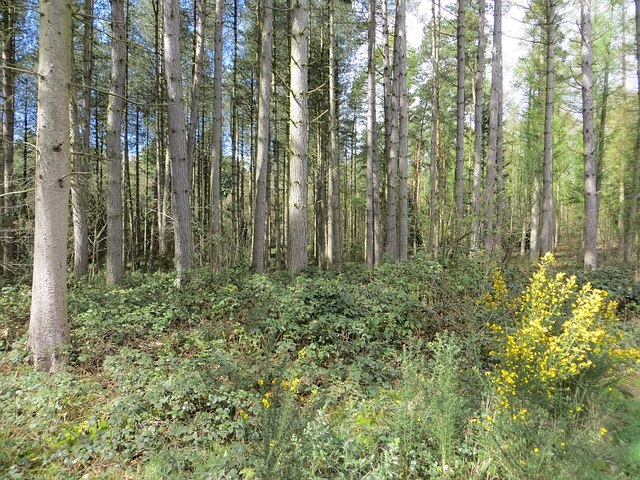 Brambly woodland, Dudmaston