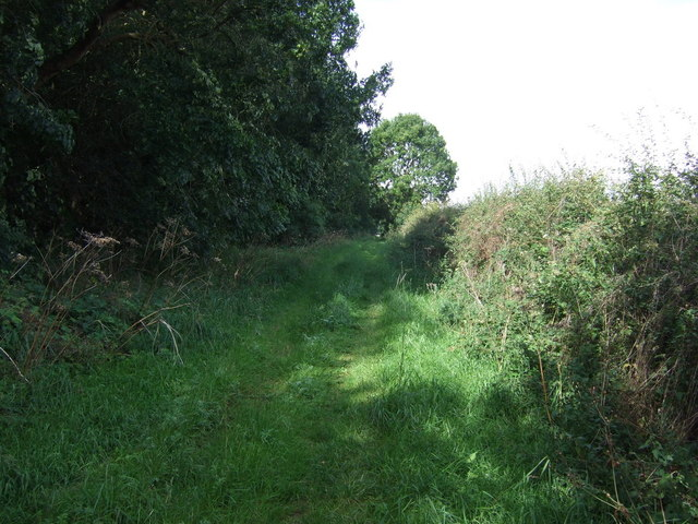 Farm track beside Fox Covert Plantation