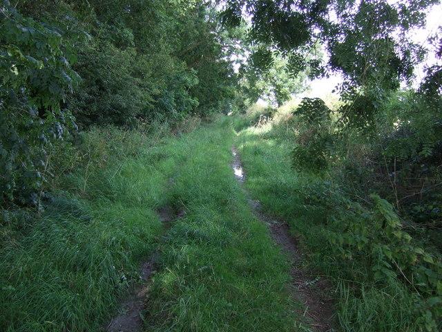 Farm track beside Fox Covert Plantation