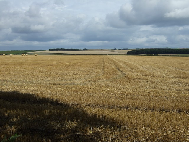 Stubble field, South Dale