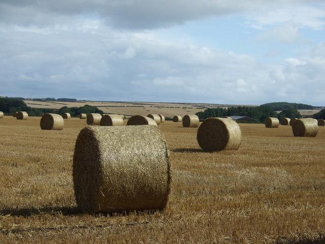 Bales, South Dale