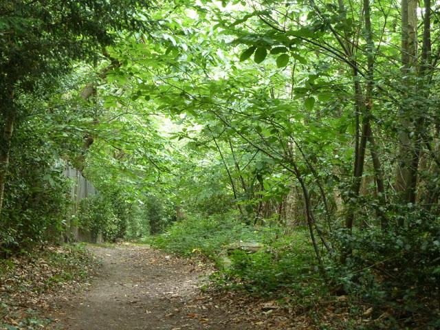Path, Spring Park woodland